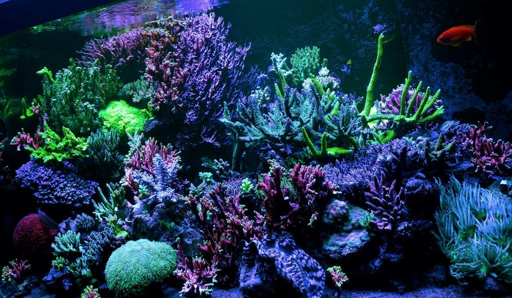 Led Aquarium Moonlight Night View Aquarium Led Lighting