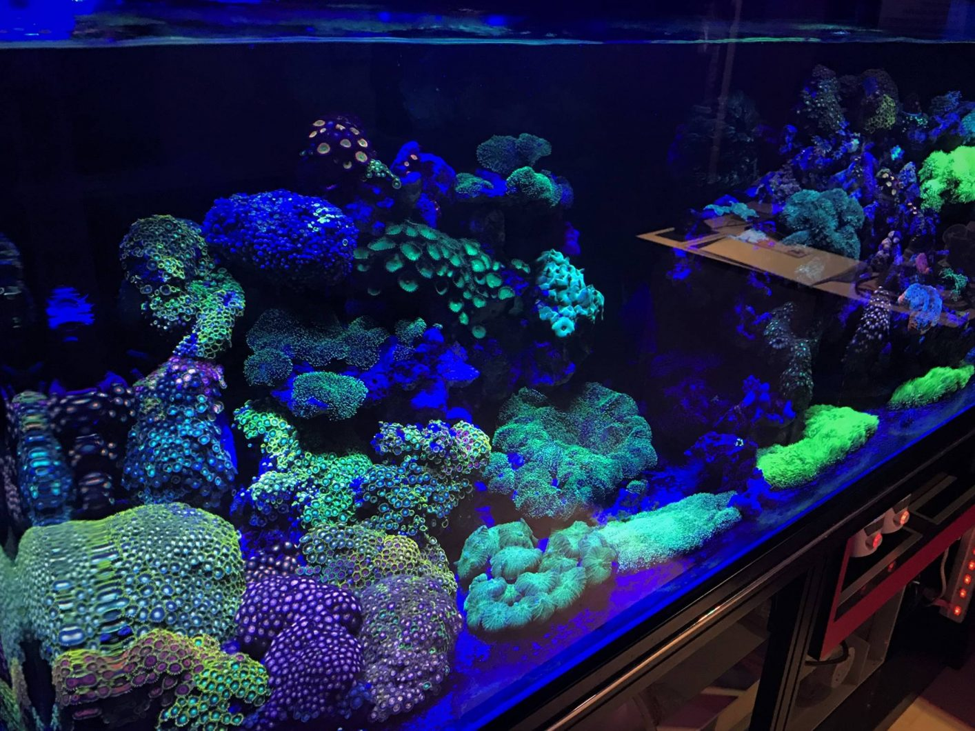 Night Aquarium View_LED