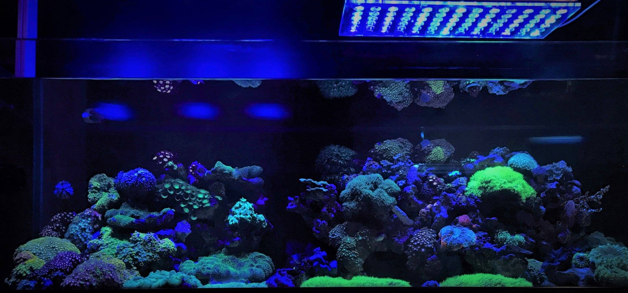 Led Aquarium Moonlight Night View Orphek