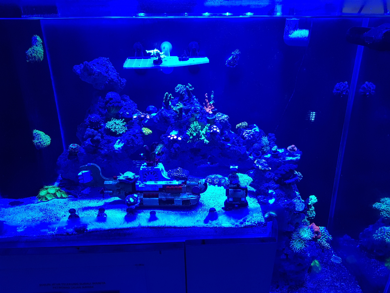 Reef aquarium from malaysia under orphek led aquarium for Fish aquarium lights