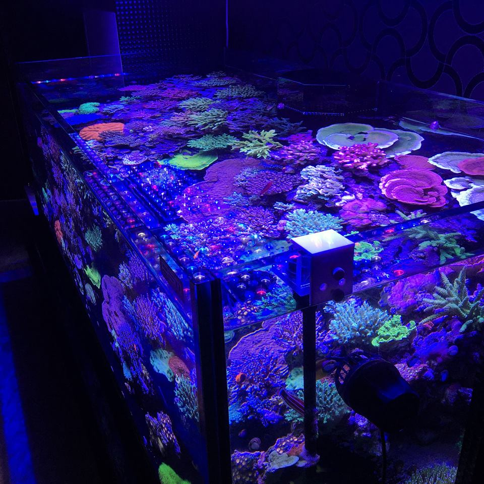Moonlight_aquarium_LED