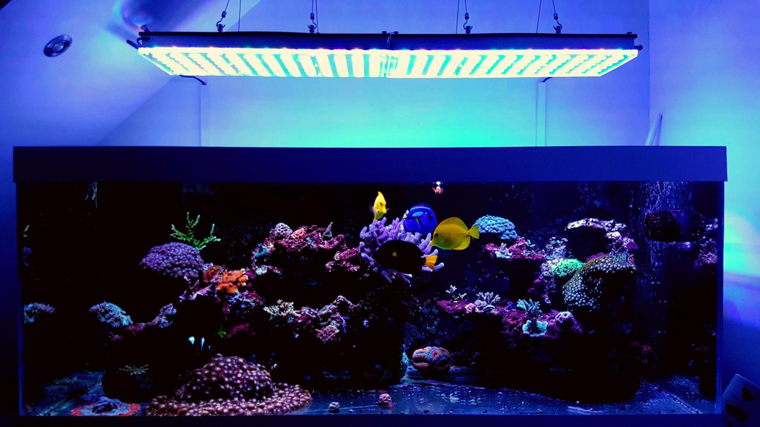 led with in liters aquarium uk orphek atlantik lighting makeover lights light