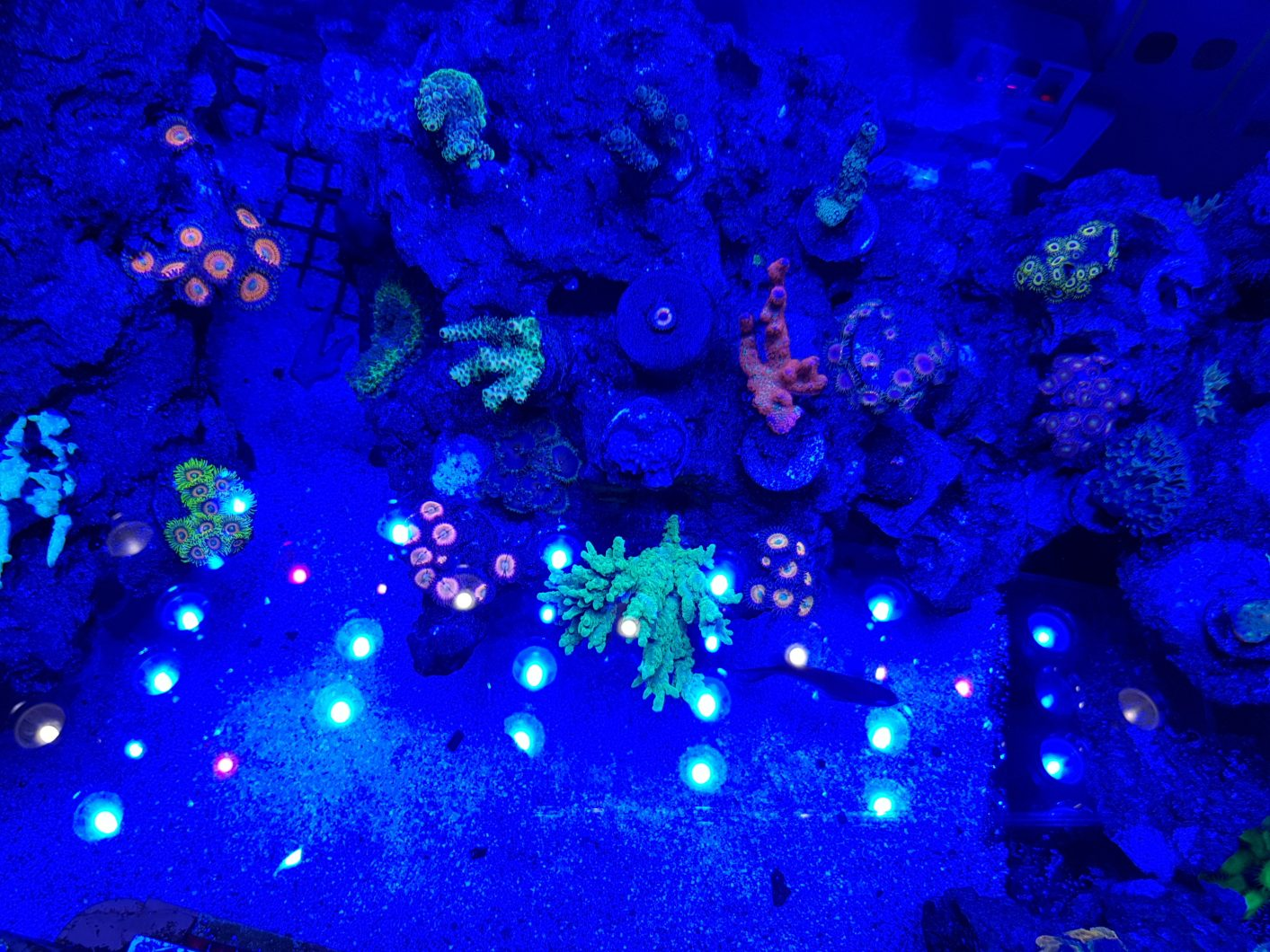 aquarium_moonlight_led