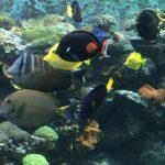 सुंदर-चट्टान समुद्री मछलीघर-Orphek-एक्वेरियम-एलईडी-light00006