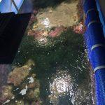 akwarium z rafami makroglonów