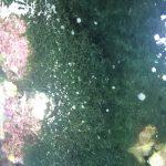 makroalgi w akwarium