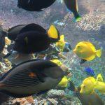 खारे पानी-मछली टैंक