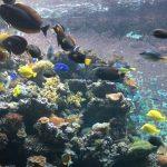 niesamowite akwarium z rafą ryb