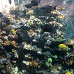 विशाल मछली टैंक