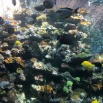 gigantyczny akwarium
