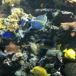 feeding fish aquarium