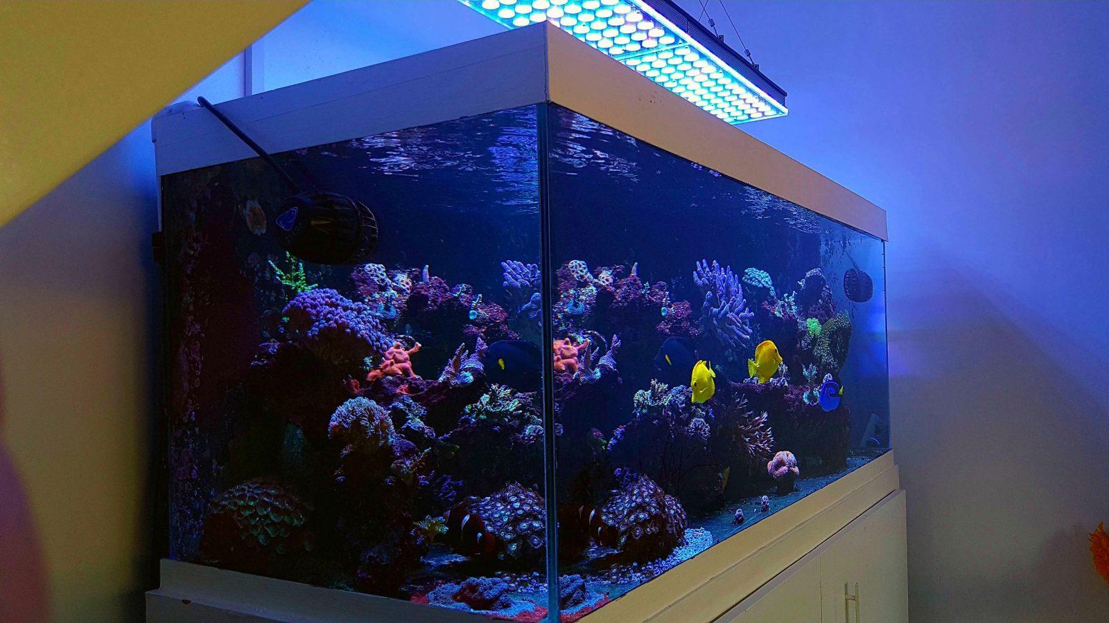 Clientes del Reino Unido revisan la iluminación LED Atlantik V4 Reef Aquarium