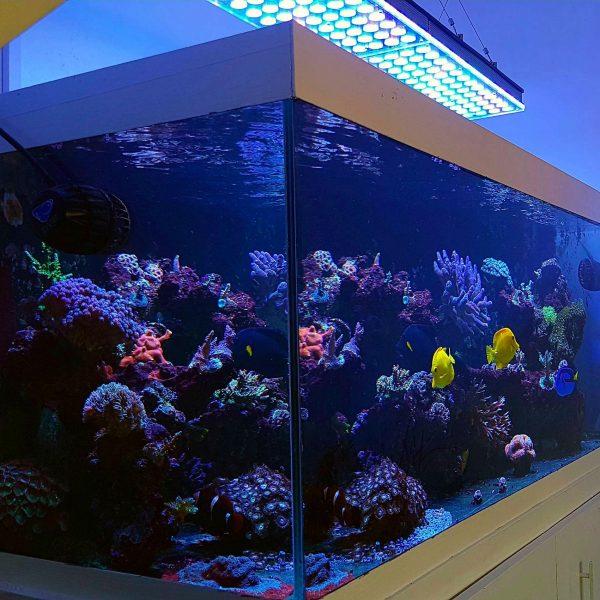 Khách hàng của Anh Xem xét Atlantik V4 Aquarium Reef Ánh sáng Ánh sáng