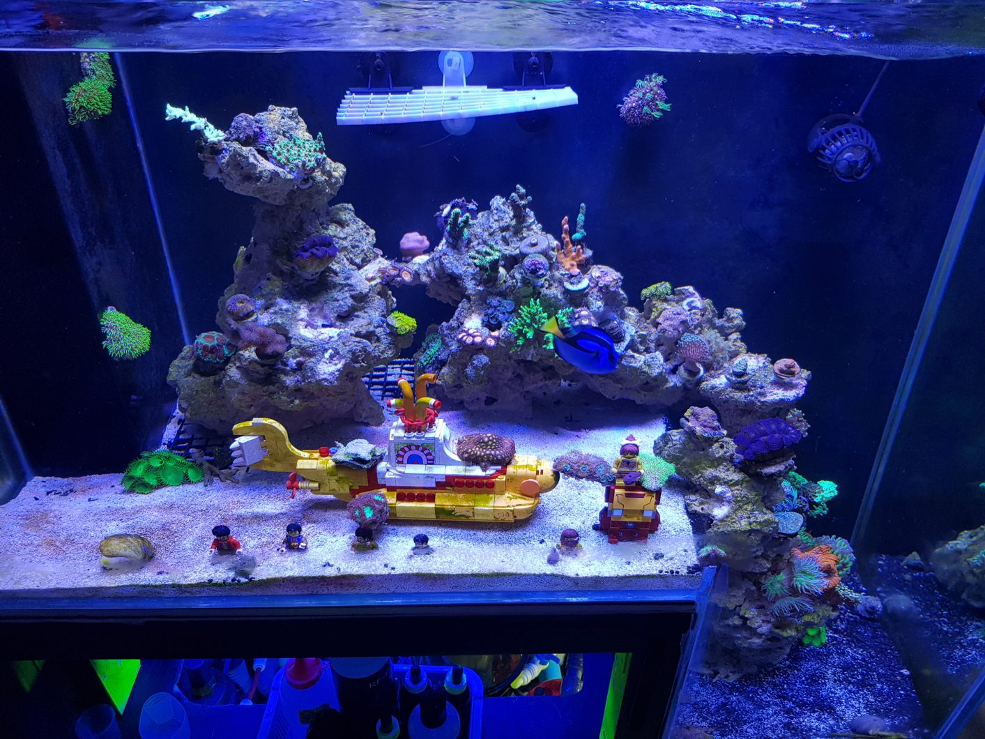 reef aquarium from malaysia under orphek led aquarium. Black Bedroom Furniture Sets. Home Design Ideas