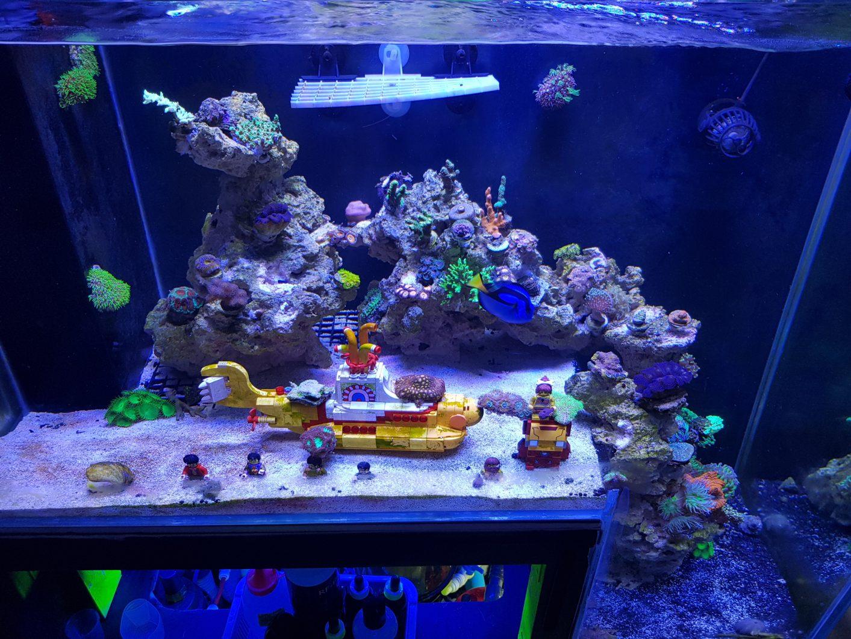 الشعاب المرجانية أكواسكابيكسنومكس