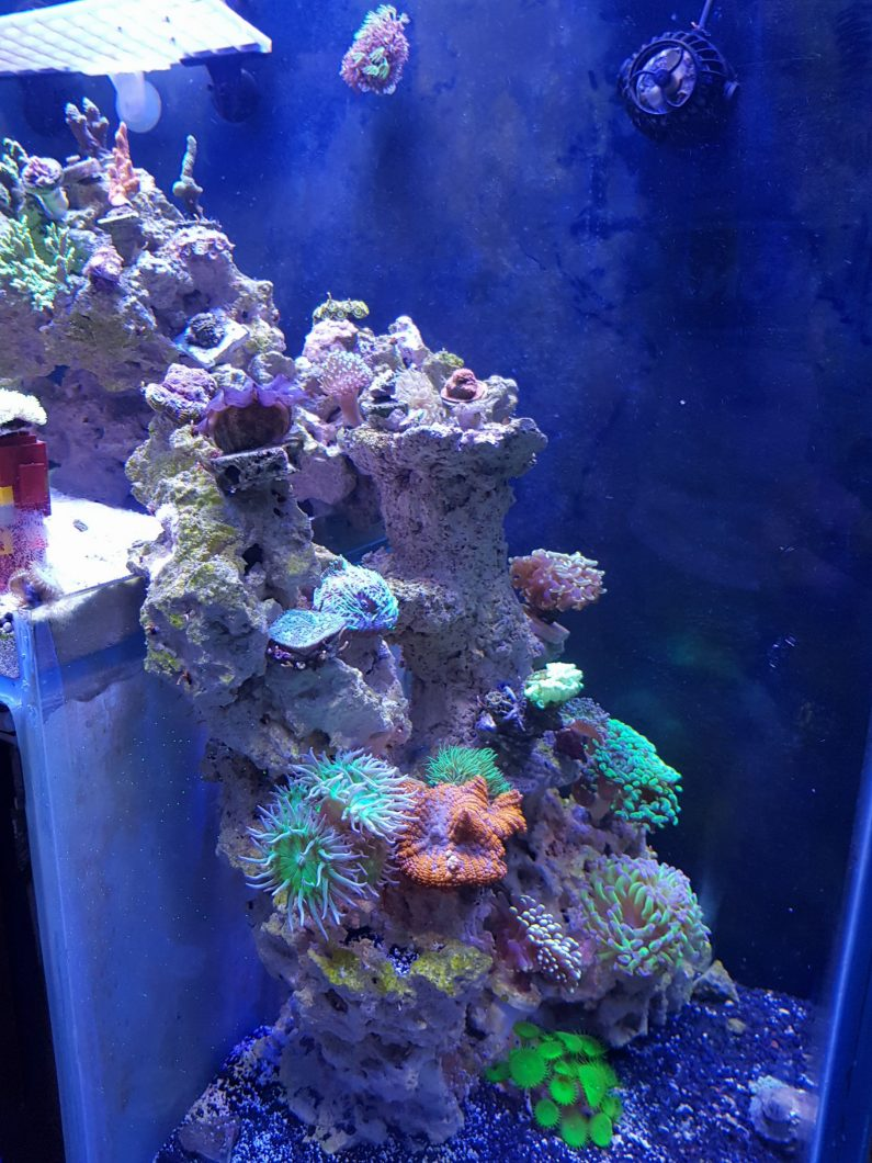 dropdown aquascape reef_aquarium