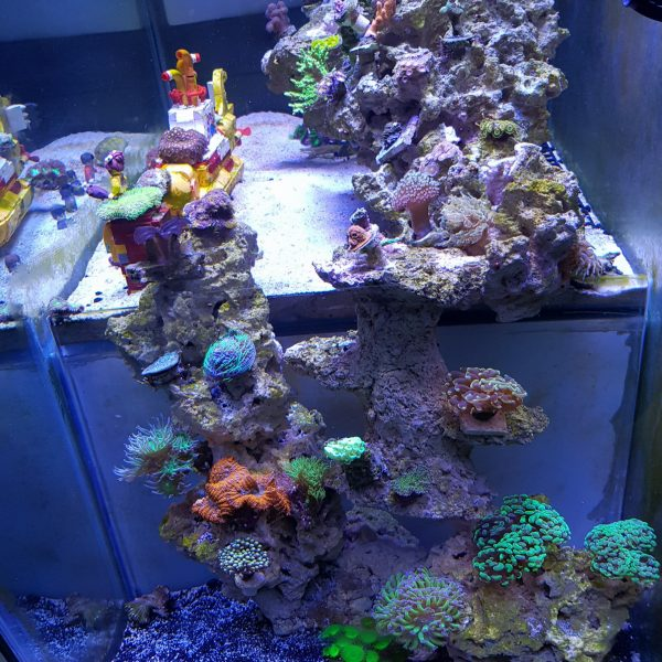 Orphek LED水族灯下的马来西亚珊瑚礁水族馆