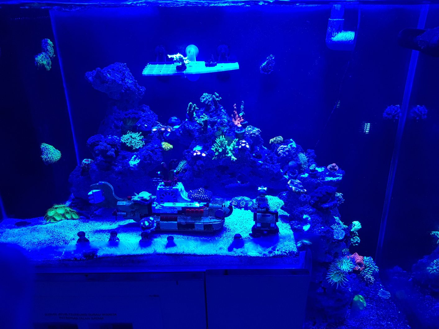 reef_aquarium_ aquascape_dropdown_blue