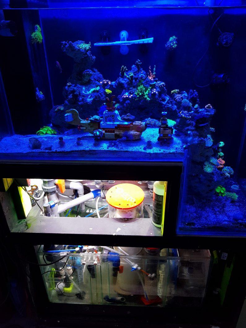 reef_aquarium_ ఫ్లోరసెంట్_ పగడాలు