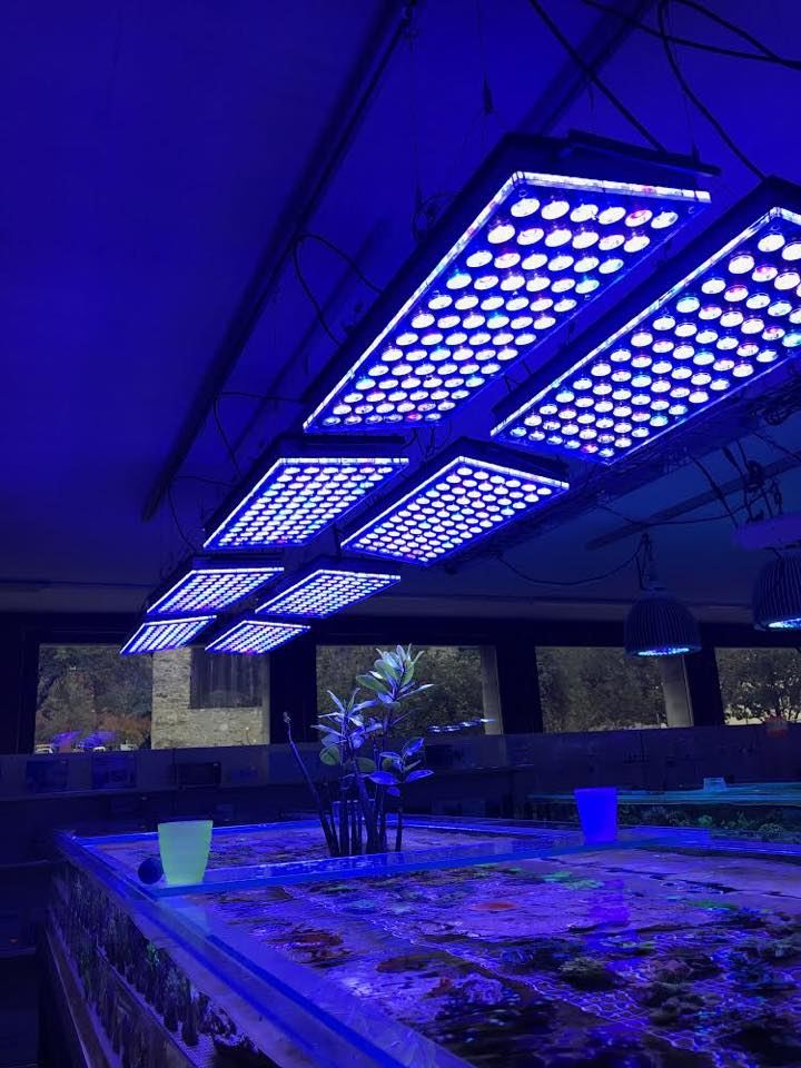 Best_aquarium_LED_lighting