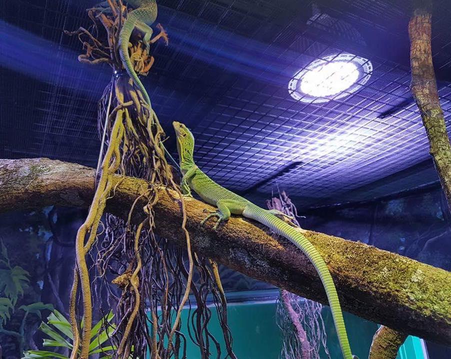 ケアンズ水族館の爬虫類