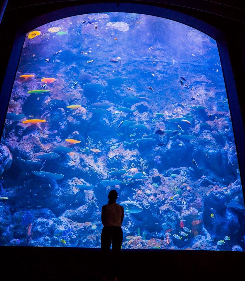 Inspirationen Aquarium Led Beleuchtung Süßwasser 2018: Portfolio • Orphek Aquarium LED-Beleuchtung