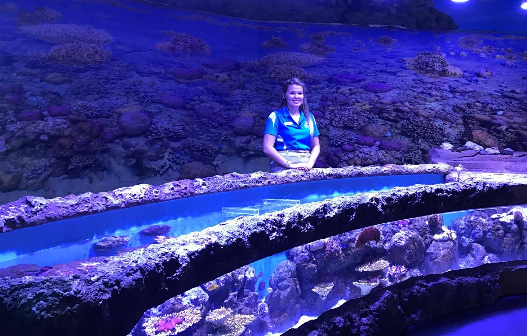 Cairns Aquarium Orphek LED Light Project in Australia ...