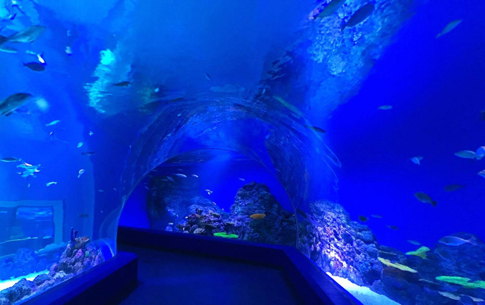 Public Aquarium LED-belysning