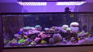 USA Riffaquarium mit unserer neuen 108 Watt OR 120 LED Bar