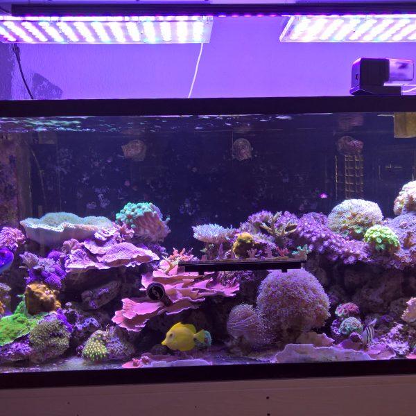 USA reef tank с нашей новой светодиодной панелью 108 Watt OR 120