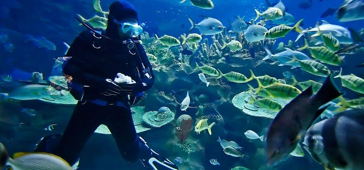凱恩斯 - 水族館30970_1200x560