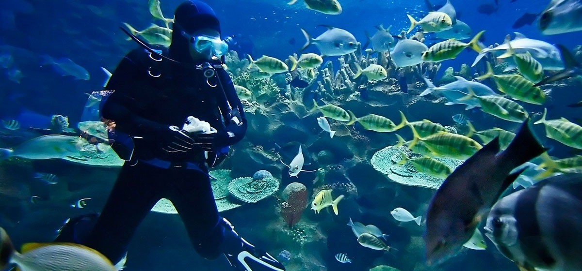 Cairns-Aquarium-30970_1200x560