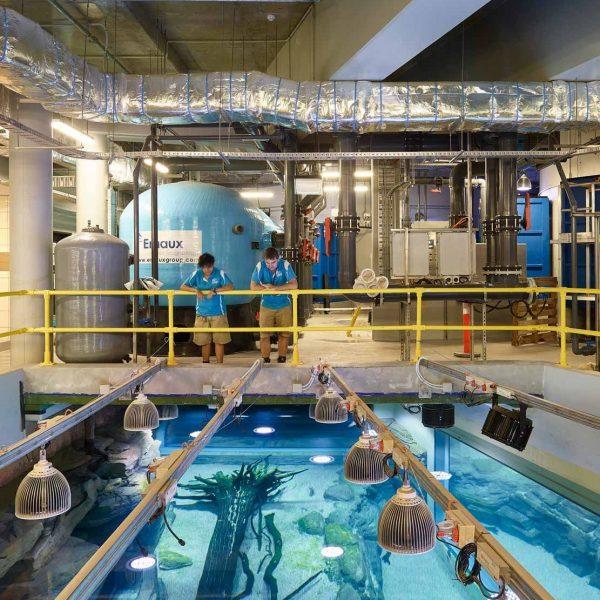 Cairns Aquarium Orphek LED Light Project в Австралии