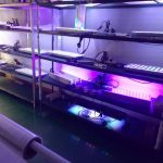 LED-Aquarium-Lighting-Orphek- виробництво00013