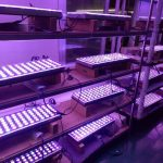 LED-Aquarium-Lighting-Orphek- виробництво00016