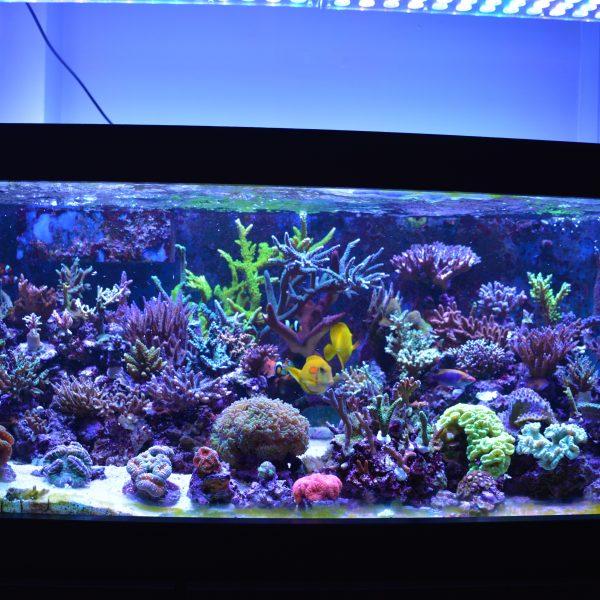 Риф-аквариум освещенный светодиодным прибором Atlantik V4