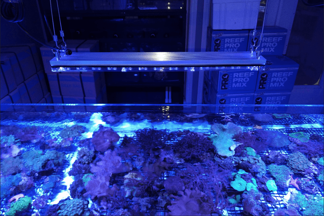 LED-aquarium-lighting-coral