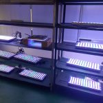 LED-akvarium-belysning-in-test