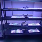 LED-lighting-manufacture