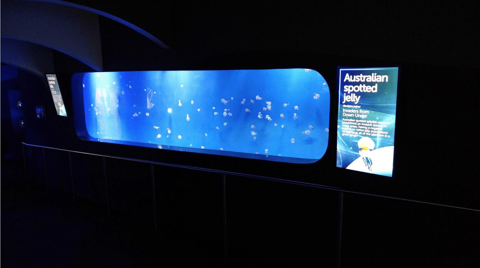 Portfolio orphek aquarium clairage led - Eclairage led aquarium ...