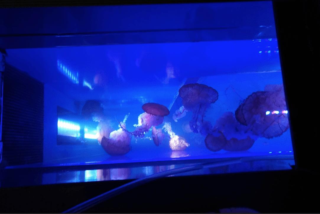 জেলি-মাছ