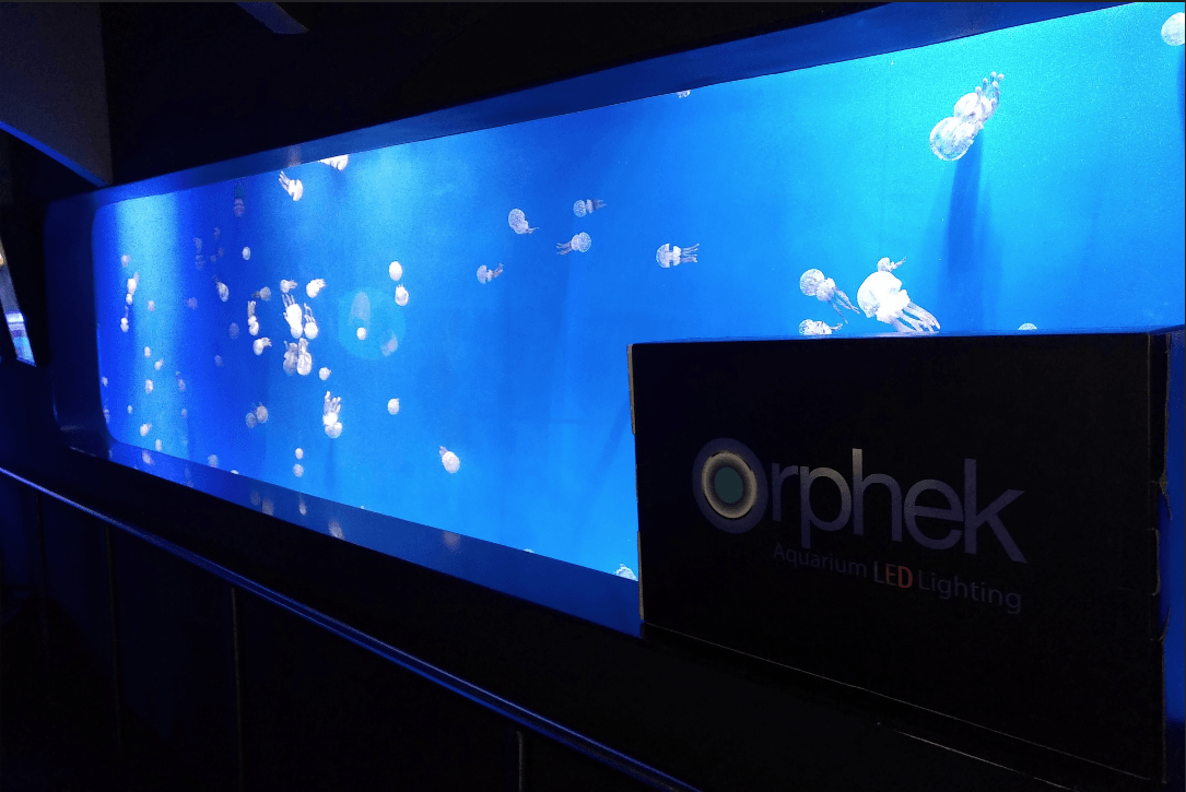 -Orphek LED-public-aquarium
