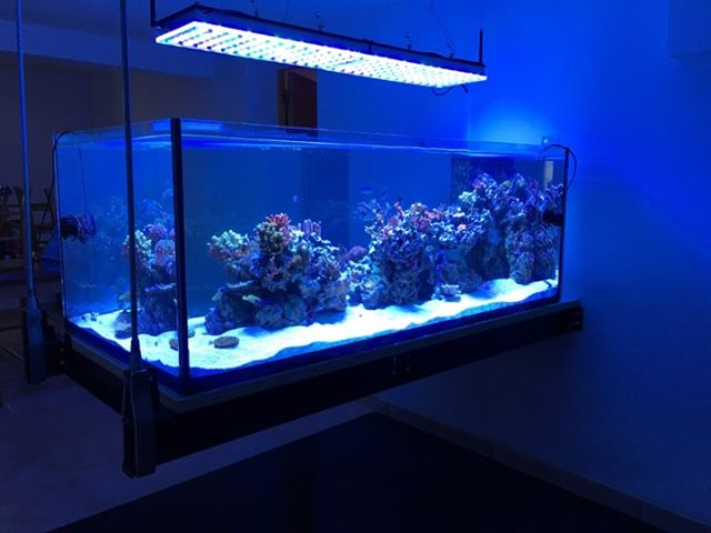 LED REEF blue