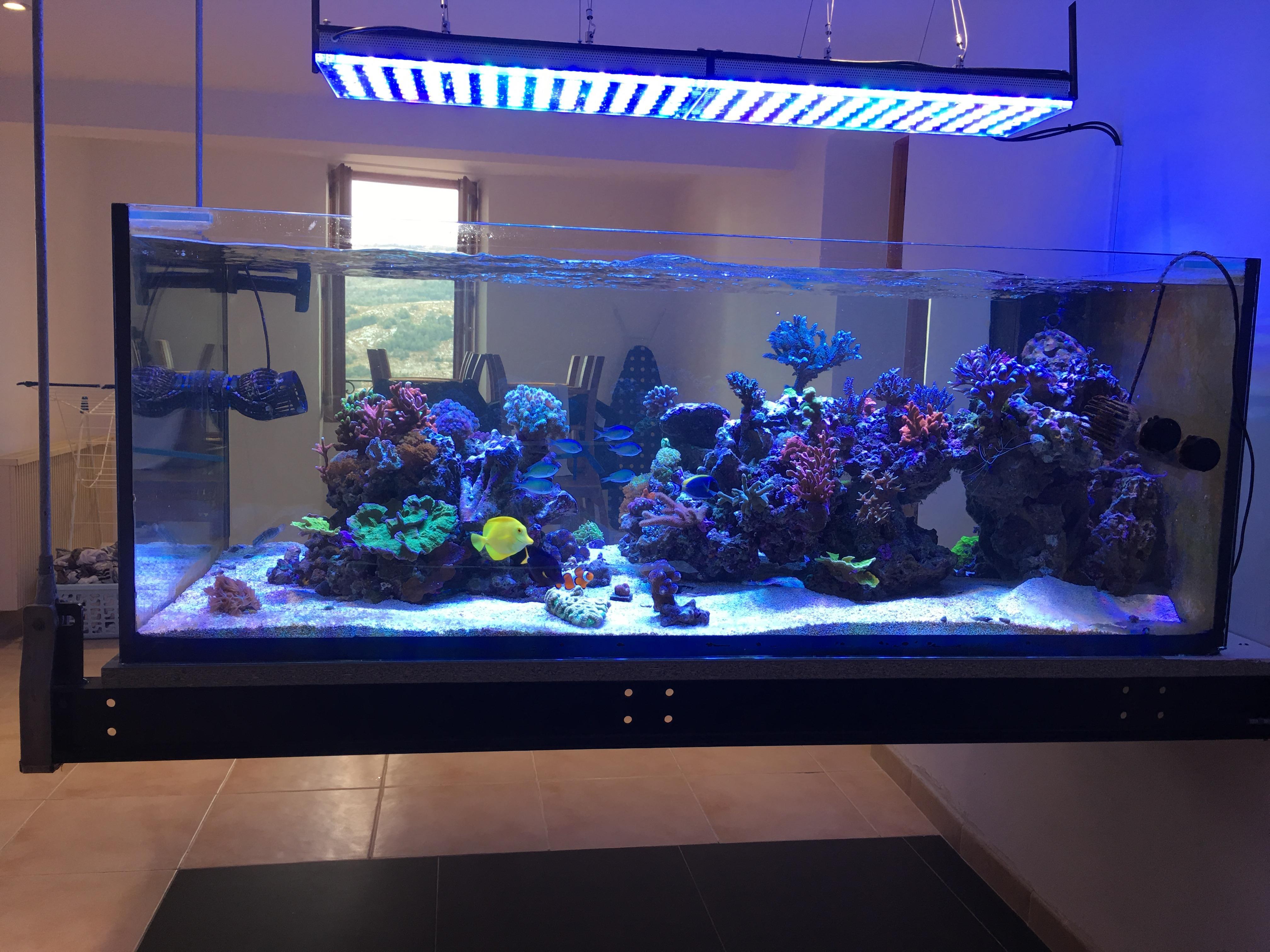 aquarium mit led beleuchtung. Black Bedroom Furniture Sets. Home Design Ideas