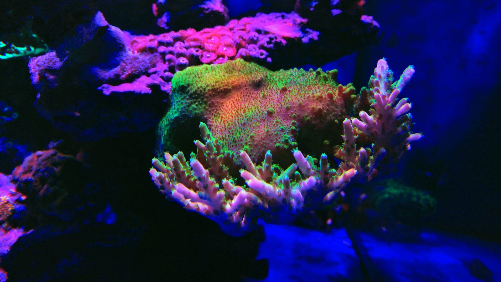 حیرت انگیز _color_reef_quarium