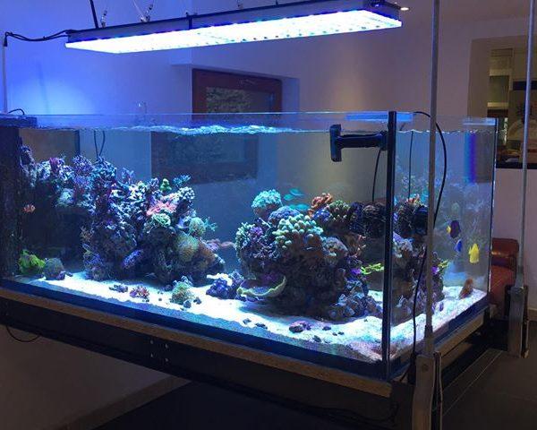 Удивительный аквариум из Франции с Orphek Atlantik Reef Aquarium LED Lighting