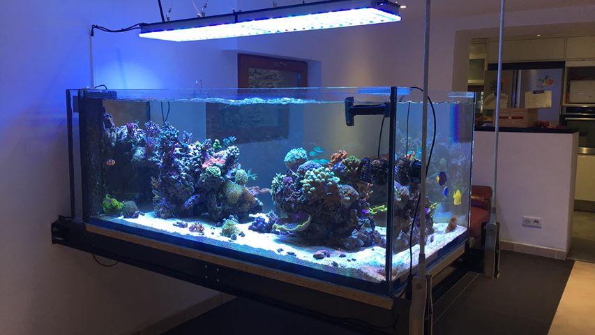 Incredibile acquario dalla francia con orphek atlantik reef