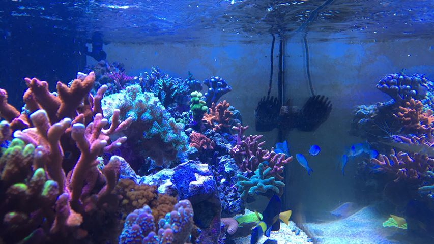 水中のサンゴ礁