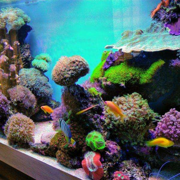 Asiakkaan kommentit Kasvu on hämmästyttävää Atlantik v4 Reef Aquarium LED -valaisimilla