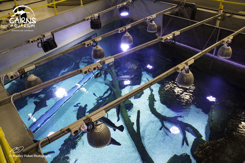 akwarium z Australią voordelen van randki online
